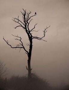 FTF Tree
