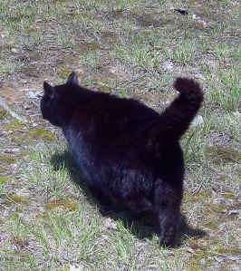 Black-Cat-walking-away